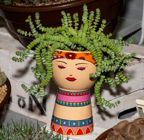 Pic-1.-Quirky-cacti