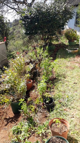 FTH23-6-Ground-orchids-succulentsaloes-basil-bushes-