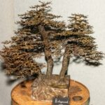 Pic-1-Metal-sculptured-tree-by-David-Powell-Pic-by-Rob-Tysall