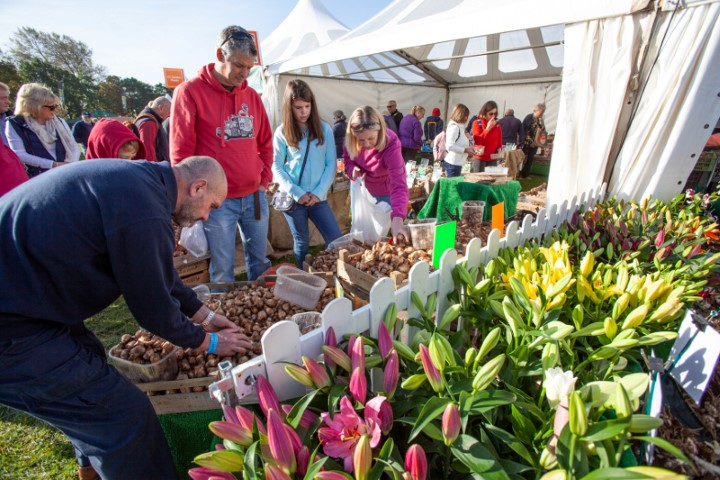 Pic-10.-Buying-bulbs-Pic-courtesy-of-Malvern