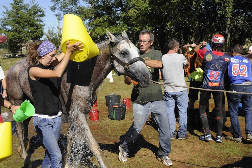 cooling-down-a-horse-at-a-Vet-Gate-